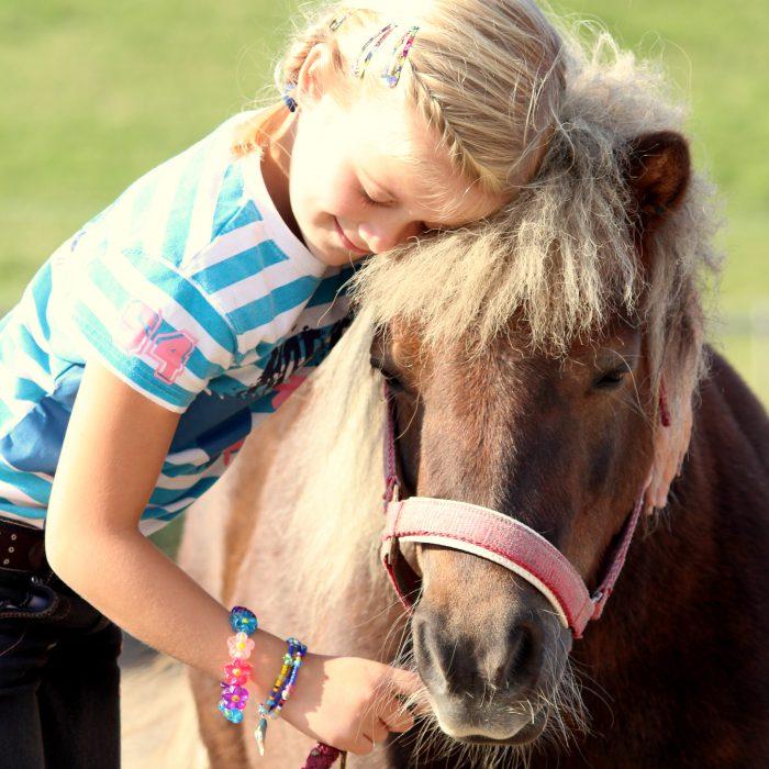 Ponys und Pferde im Nordseeurlaub